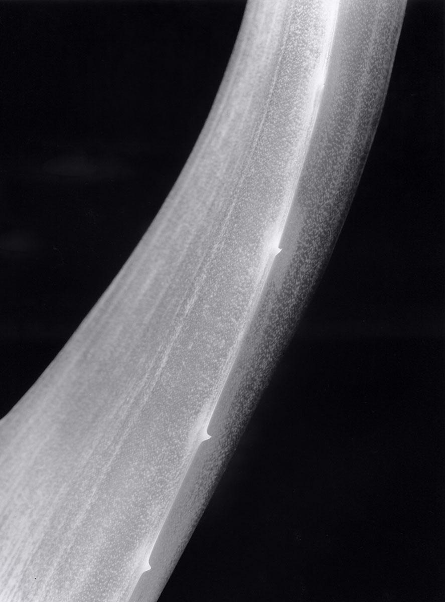 Aloe Detail